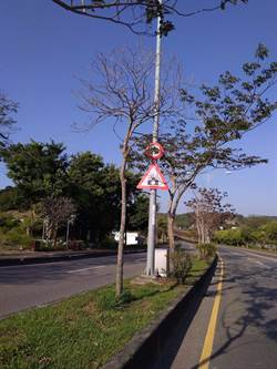 測速取締告示牌被樹遮擋 超速罰單撤銷