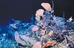 陸科考船 發現罕見海底花園