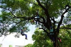 拉近人與自然距離 青少年爬樹學紓壓