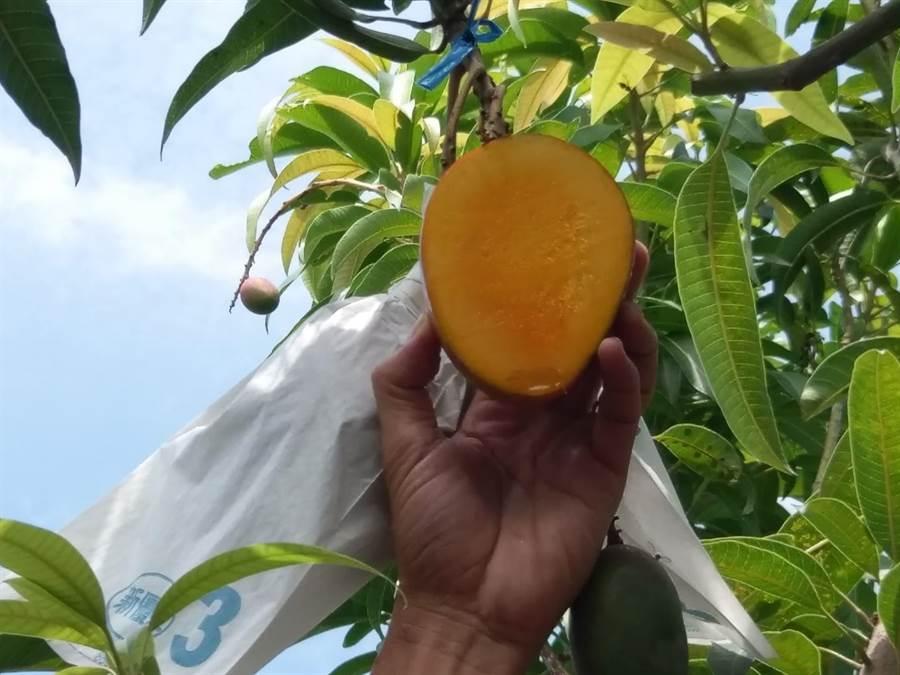 綠農的家落實友善環境農法14年,30日向大家證明該法可以提高農民收益、給消費者最好的水果,並以草生栽培守護國土,是達到3贏的農法。(謝佳潾攝)