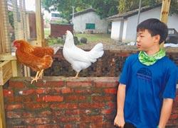 好雞會! 學童畜養學習微經濟