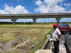 台南「割稻仔尾賊」出沒 逾3公頃農地受害