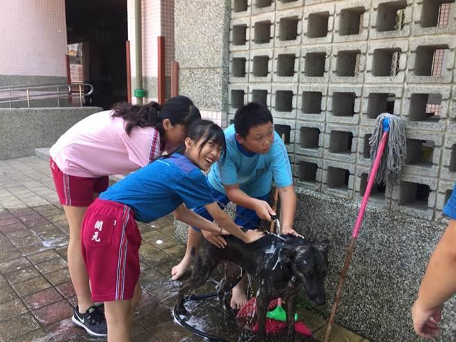 開元國小學童幫校犬「汪汪」洗澡。(程炳璋攝)