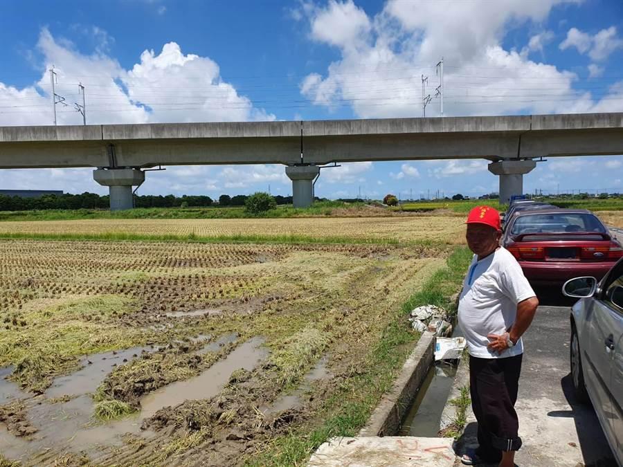 台南一期稻作有3公頃農田驚傳一夜之間遭盜賊收割。(莊曜聰攝)