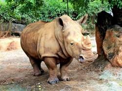 怎請黑猩猩張嘴檢查牙齒?動物園暑期營隊揭秘趣