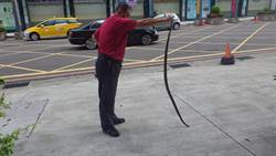 基隆市年接300件捕蛇案 議員促制定SOP