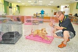 動保團體 結紮流浪犬 人道減量