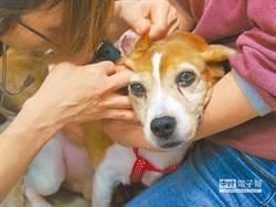 寵物用人藥違法 獸醫師公會籲修法解套