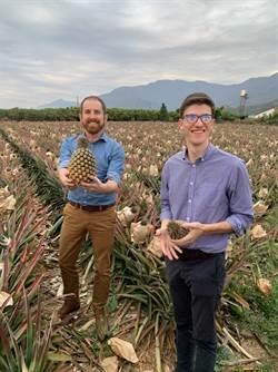 家樂福採購5萬公斤台灣鳳梨 銷往大陸