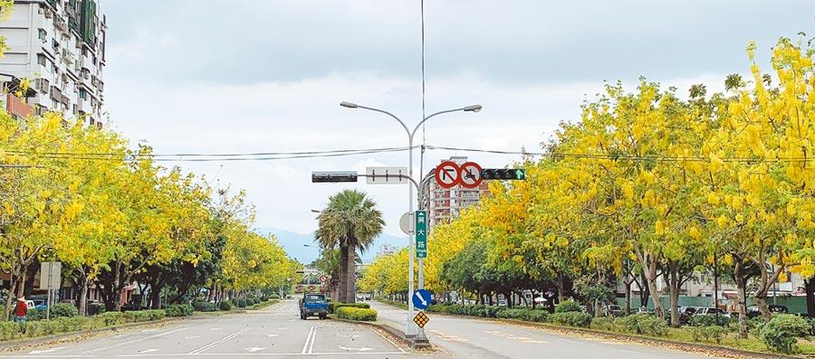 每年這個時節,阿勃勒樹梢上掛滿黃澄澄花朵,恰似串串金色小鈴鐺,台中市成為新興的賞花景點。(陳世宗攝)