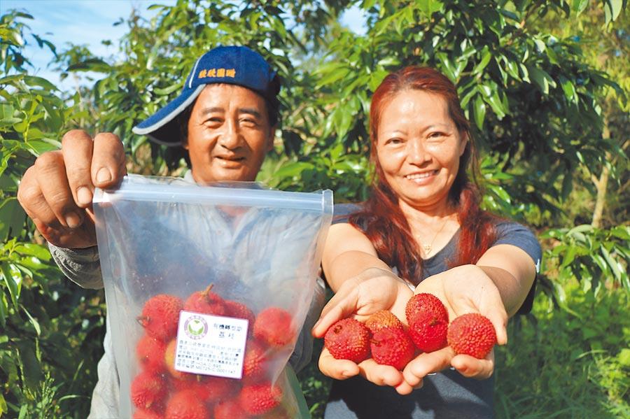 恆春農友林成材(左)堅持自然農法種玉荷包,今年成功戰勝暖冬無虧本。(謝佳潾攝)