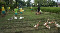 重溪國小推自然環境教育 校園成動物大觀園