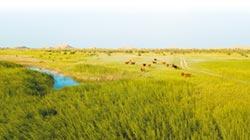 台灣人看大陸》呼倫貝爾草原看馬背上的民族