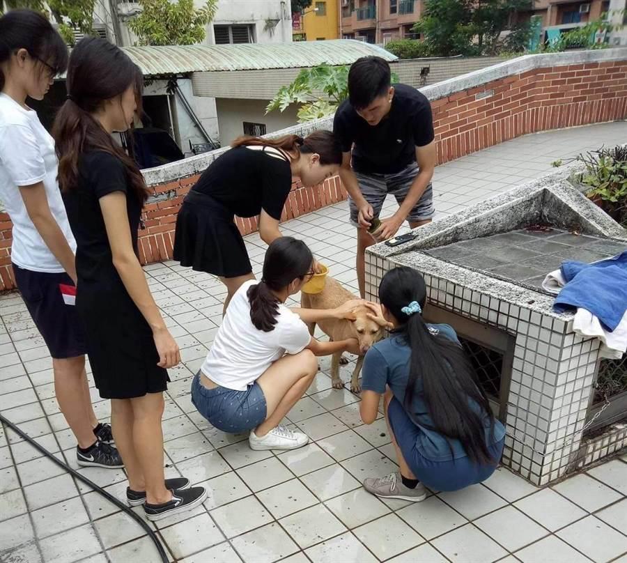 高師大愛護動物社志工為校犬洗澡。(高師大提供)