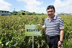 薏苡栽培成果示範  大雅農會推廣新品種