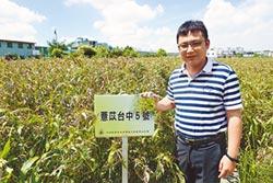 薏苡新品種台中5號 栽培成果示範