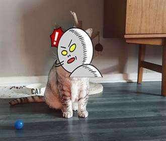 小貓罹怪病 皮肉垂地如老人