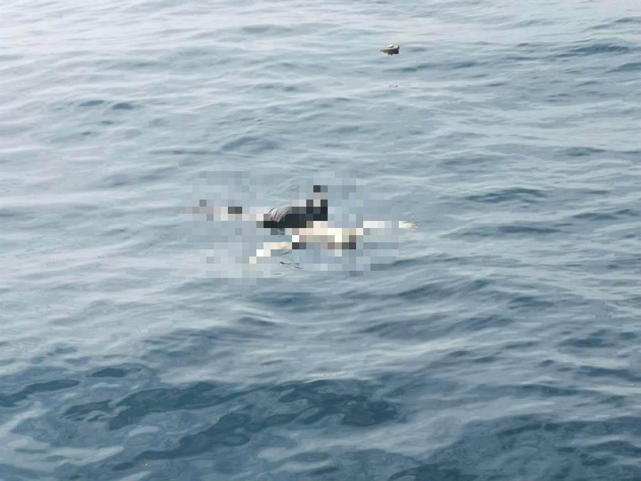 海巡隊今(7)日上午在新北市貢寮區龍洞外海約1浬處,發現有1具浮屍。(張穎齊翻攝)