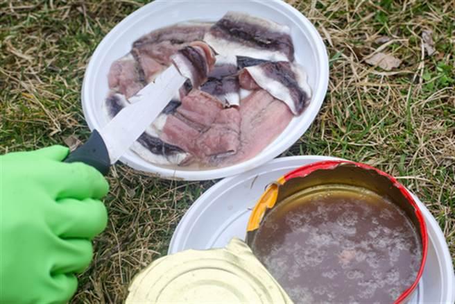 鯡魚罐頭臭到爆 為何還有人敢吃?(圖片取自/達志影像)