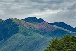 大劍山杜鵑花大爆發 福壽山就能看的到