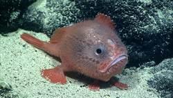 美新研究首度發現 魚也會在水裡「憋氣」