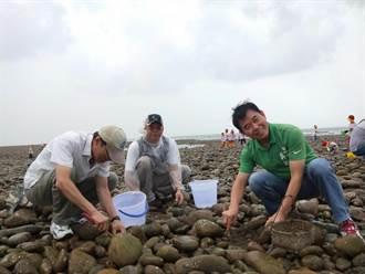 海瓜子復育有成 7月起開放採捕