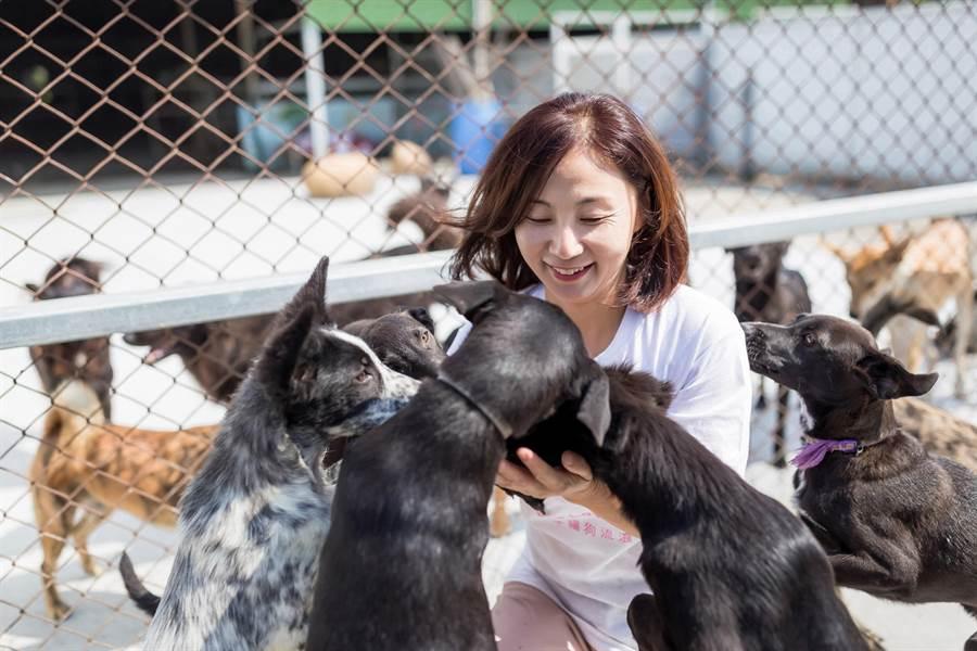 「台湾幸福狗流浪中途协会」创办人人称「陈爱妈」,经营逾10年协助近千只流浪动物。