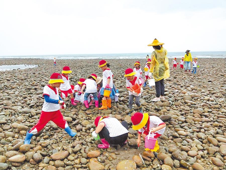 幼兒園戶外教學採捕小眼花廉蛤,讓小朋友體驗在地特色。(陳淑娥攝)