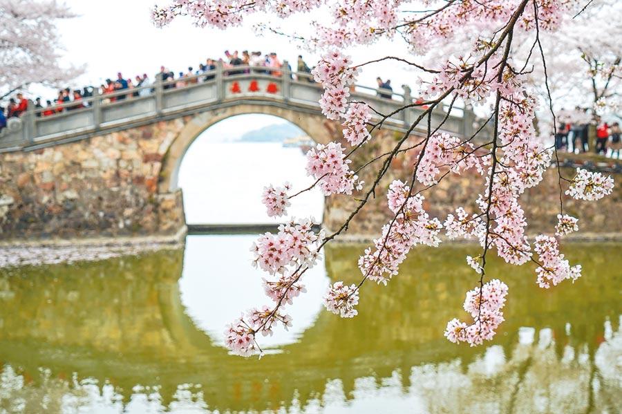 2019年4月2日,遊客在江蘇無錫太湖黿頭渚風景區內賞櫻遊玩。(新華社)