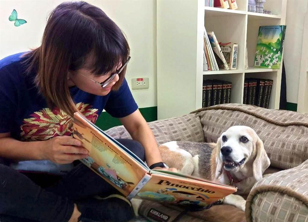 屏科大工作犬訓練中心的米格魯Minnie之前是偵測犬,因年紀大了嗅覺退化,退伍後「轉行」擔任閱讀犬。(潘建志攝)