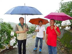 李朝塘冒雨視察南化芒果產銷 果農關心三級品收購價