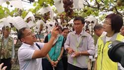 關心彰化葡萄災情 農委會指示辦理現金救助