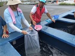 台塑與雲林區漁會放流魚苗 保生計永續