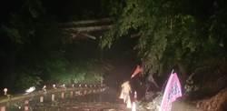 豪雨不斷 梨山五葉松巨木倒塌壓毀台電高壓線路