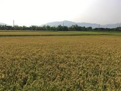 梅雨鋒面農損1286萬元 雲林縣佔6成3