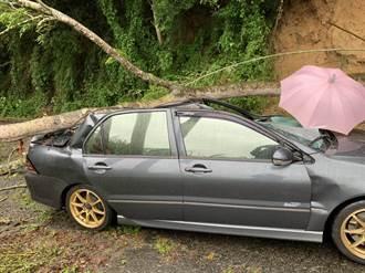 大雨轟倒路樹 壓毀車輛駕駛送醫