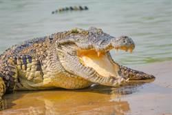 湖畔散步赫見湖中鱷魚頭上插把刀