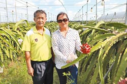 臺南首座有機農業專區行銷海內外