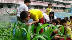 秋行軍蟲來勢洶洶 「象農夫」進校園推防治教育