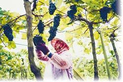 台灣葡萄酒 威石東國際發光