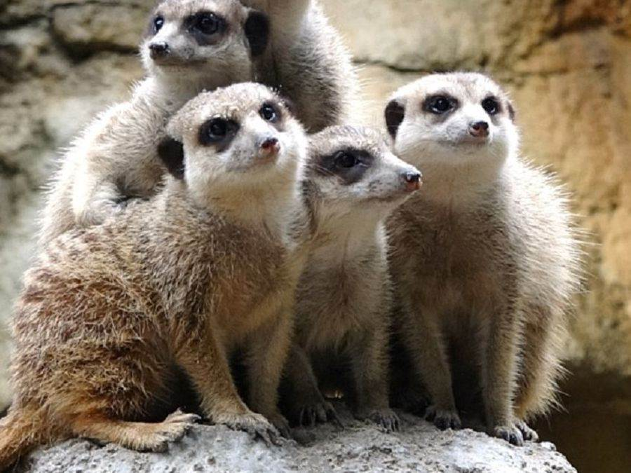 台北市立動物園休園倒數最後2天,108年6月19日(三)起至108年6月28日(五)止,共有10天「不對外開放」。(台北市立動物園提供)