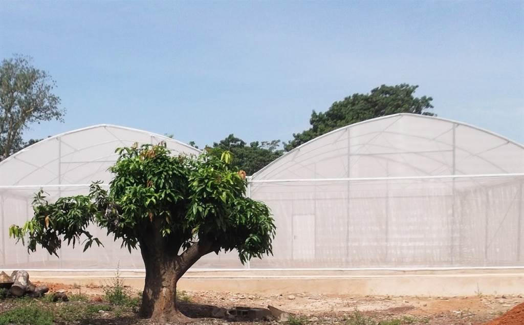 科學家在布吉納法索設計3個溫室小屋,模擬蚊子生存的環境,然後試驗真菌滅蚊的效果。(圖/newatlas)