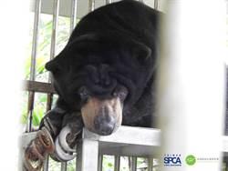 野保動物遭惡劣飼養 動保團體轟稽查流於形式