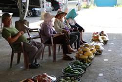 好吃芒果哪裡有 大內青果市場開賣