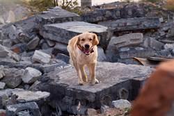 愛犬突狂吠吵醒主人 十秒後就地震