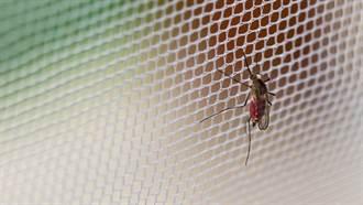 基改真菌滅蚊 西非試驗成功