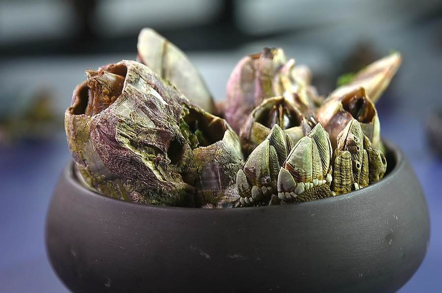 四面環海的台灣盛產各式海鮮,這個夏天〈RAW〉主廚Alain特意用了鵝頸、佛手藤壺與其它珍稀帶殼海鮮入饌。(圖/姚舜)
