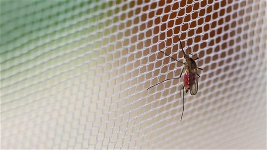 蚊子是健康殺手,每年死在蚊子叮咬的性命達到70萬人。(圖/網路)