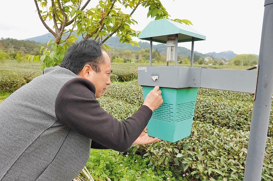福建南平提出「科技特派員」概念,圖為科技特派員張錫友在生態茶園內檢查捕蟲裝置。(新華社)