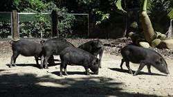 可愛動物要休假!北市動物園今起10天「不對外開放」